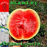 Семена, ранний, черный арбуз БЛЕЙК F1 / BLEKI F1, ТМ Libra Seeds (Голландия), 1000 семян, фото 2