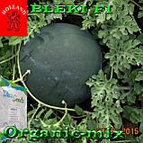Семена, ранний, черный арбуз БЛЕЙК F1 / BLEKI F1, ТМ Libra Seeds (Голландия), 1000 семян, фото 4