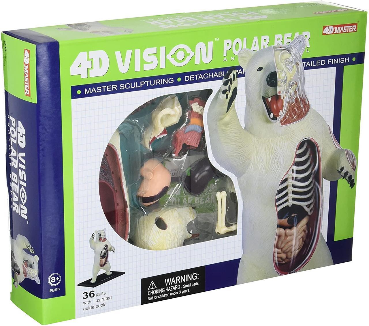 Объемная анатомическая модель Белый медведь 4D Master (26097)