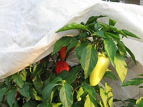 Агриспан 50 белая, 3,2*50м, фото 2