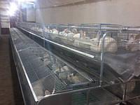 Технические рекомендации по работе с кроликом гибридом., фото 1
