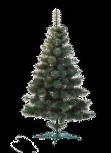 Сосна новогодняя (Сосна новорічна) Сосна зелена
