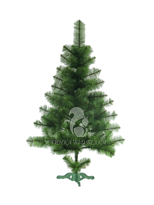 Сосна новогодняя (Сосна новорічна) Сосна світло зелена з білими кінчиками