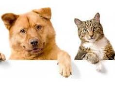 Аксесуари для домашніх тварин