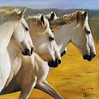 Картина за номерами на полотні 40*50 Білі коні VGR