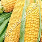 Кукуруза Леженд F1 20 шт Clause, фото 2