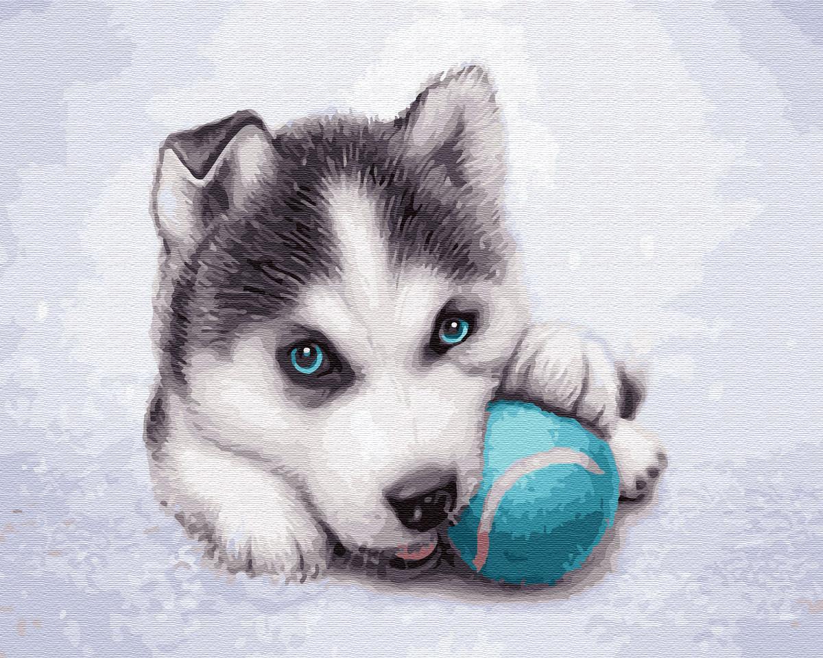 """Картина по номерам """"Игривый хаски"""" Сложность: 3 (хаски, щенок Хаски, щенок на снегу, щенок с мячиком, милый"""