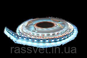 Светодиодная лента Crop SMD5050 60d/m IP33 (RGBW) (20631)