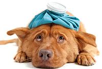 Ветеринарные препараты