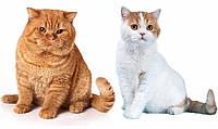 Как отличить кота от кошки в раннем и взрослом возрасте