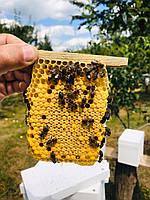 2021 Бджолині матки степова Якісні плідні продуктивні Купити матку, фото 1