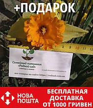 Нарцисс крупный луковицы (10 шт)