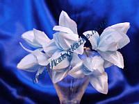 Мини-тюльпан, голубой.