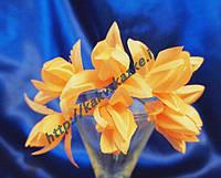 Мини-тюльпан, персиковый.