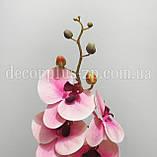 Ветка орхидеи латекс двойная, розово-кремовая, фото 3