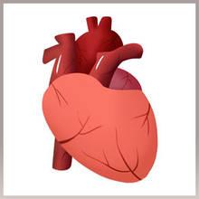 Для здоровья сердца