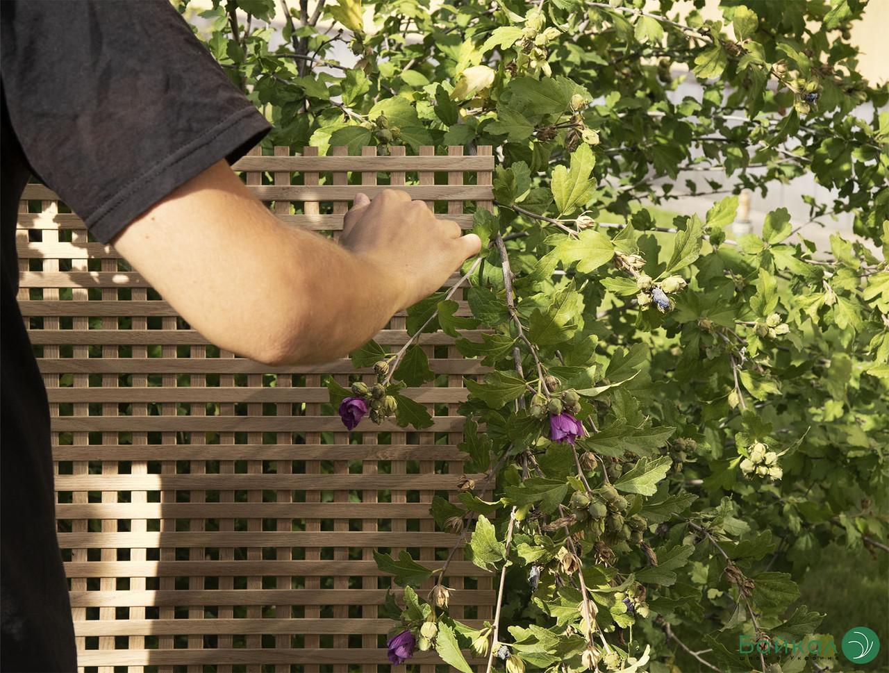 Дерев'яна декоративна решітка - 6.2R (Вільха, Бук, Клен, Ясень, Дуб)