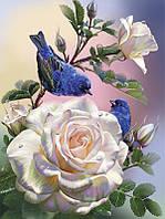 Алмазная вышивка мозаика Чарівний діамант Утренняя песенка КДИ-0084 40х30 см 30цв Квадратные стразы Полная, фото 1