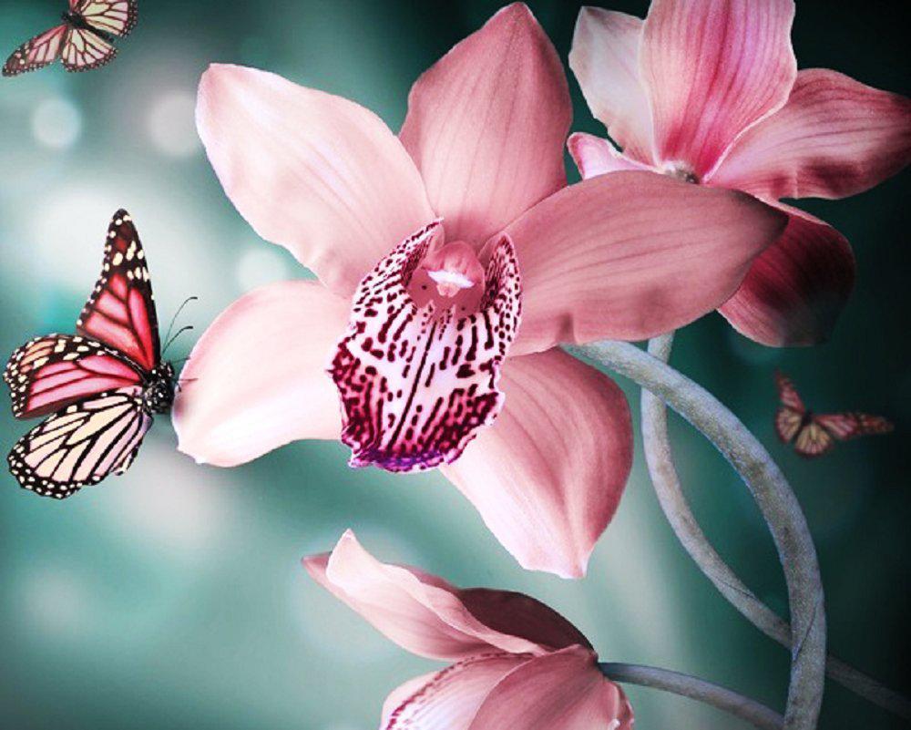 Алмазна вишивка, мозаїка Чарівний діамант Прекрасна орхідея КДІ-0309 50х40 см 27цв Квадратні стрази повна