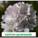 Армерія Армада (суміш) 100 шт., фото 3