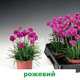 Армерія Армада (суміш) 100 шт., фото 4