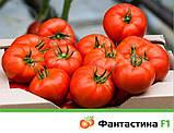 Фантастина F1 500 шт семена томата Syngenta Голландия, фото 2