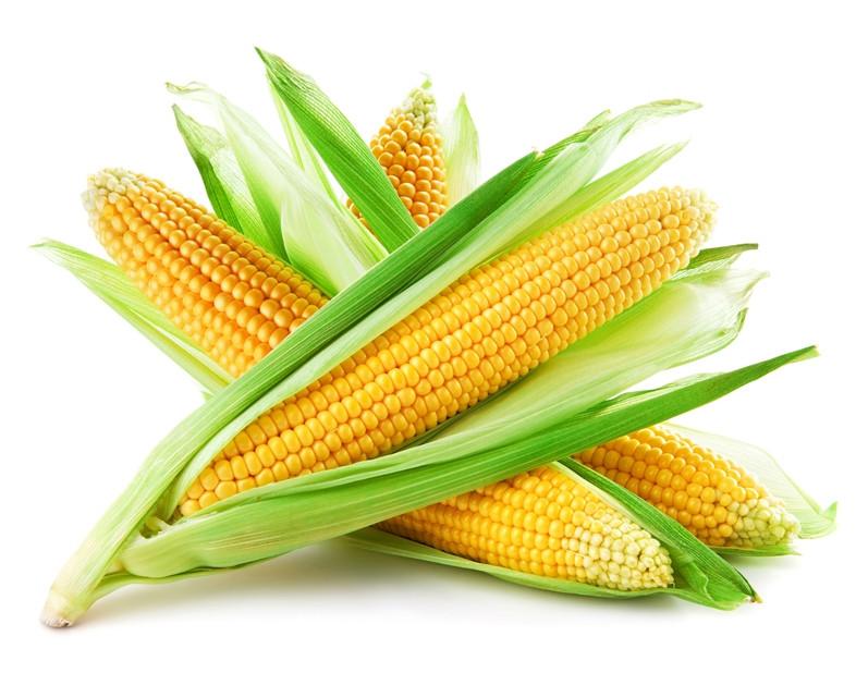 Кукуруза Белозерская