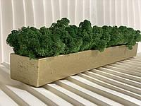 Стабілізований мох в кашпо Gold-moss Green decor A7Studio