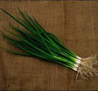 Семена лука Савел / Savel, 50 тыс.семян