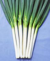 Семена лука Карел / Кarel, 50 тыс.семян
