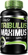 Tribulus Maximus (90 tabl)