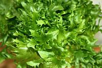 Хранение, холодная и тепловая обработка овощей. салаты.