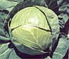 Семена капусты Балбро F1 / Вalbro F1, 2500 семян