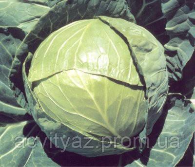 Семена капусты Балбро F1 / Вalbro F1, 2500 семян (калиброванные)