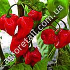 Перец Хабанеро красный 8 шт Satimex, фото 2