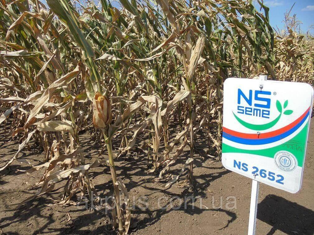 Насіння кукурудзи НС 2652 Екстра