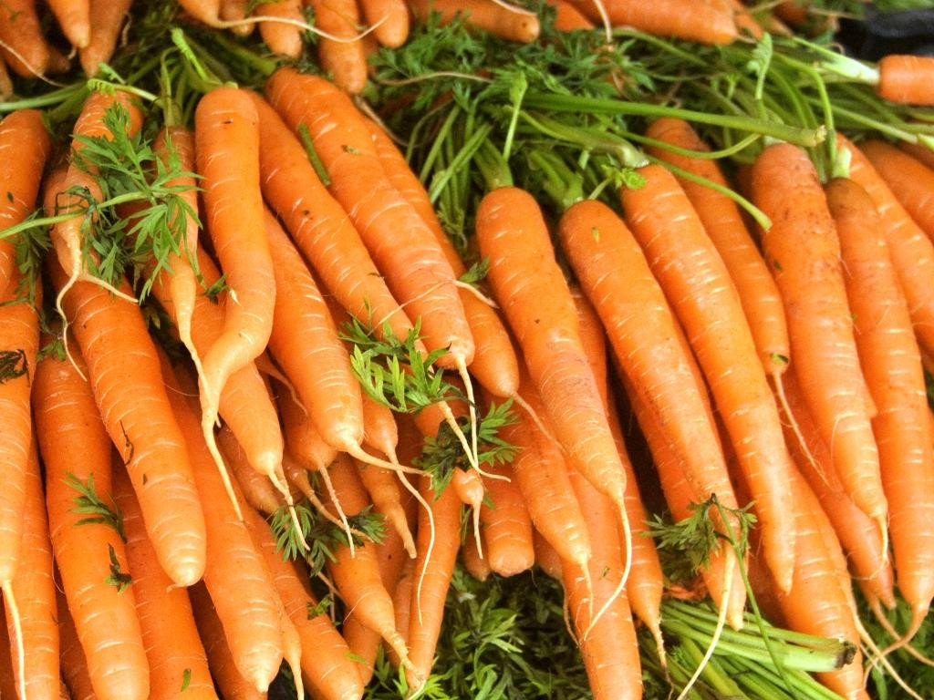 Семена морковь Амстердамская