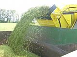 Горох  зеленый Зекон 1-Р, фото 3