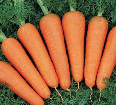 Семена морковь Артек