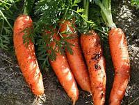 Семена морковь Долянка