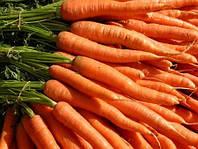 Семена морковь Корал
