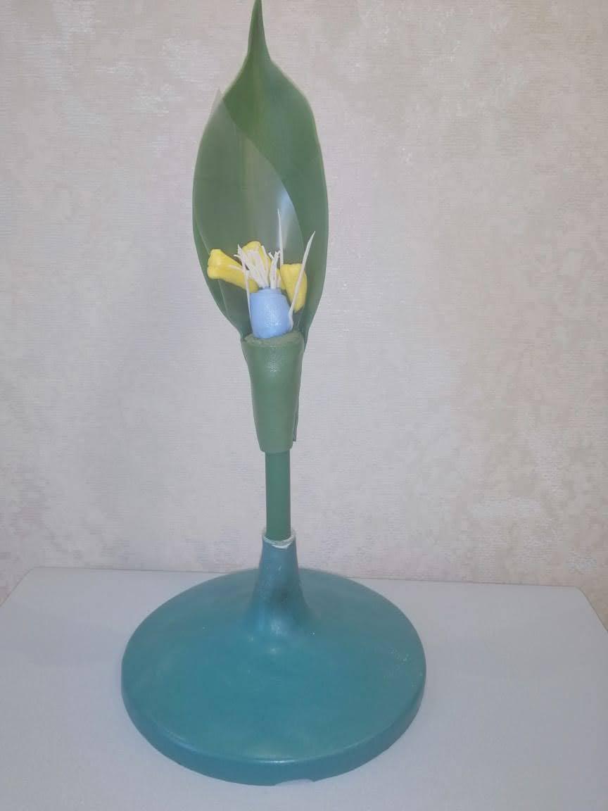 """Демонстративна модель """"Будова квітки пшениці"""""""