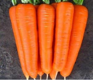 Насіння морква Нантська