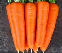 Семена морковь Нантская