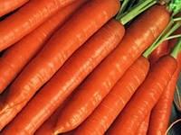 Семена морковь Флакко