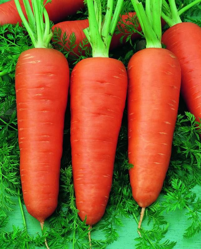 Насіння морква Шантане Роял