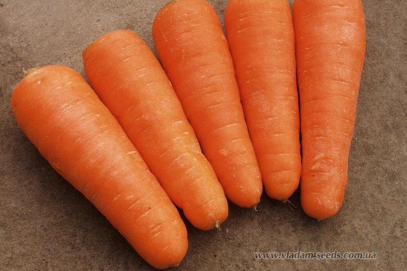 Семена морковь Шантанэ