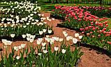 Бордюрна стрічка садова Альта-Профіль з перфорацією 0,65х150х9000 мм жовтий від виробника, фото 7