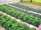 Бордюрна стрічка садова Альта-Профіль з перфорацією 0,65х150х9000 мм жовтий від виробника, фото 9