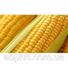 Насіння кукурудзи EURALIS ES ВИНАХІДНИЦЬКИЙ